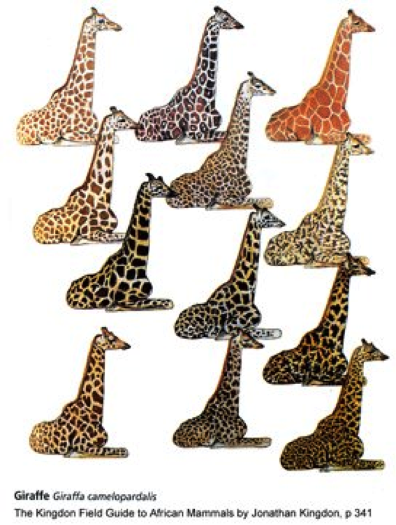 When is a Giraffe merely a Giraffe?